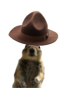 banff squirrel